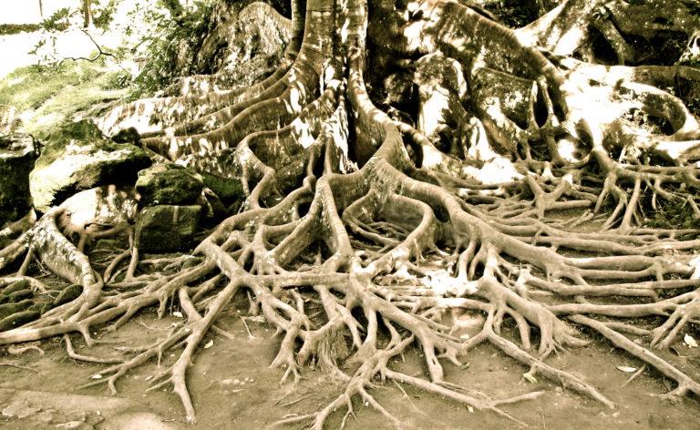 D'où vient la force du bambou?